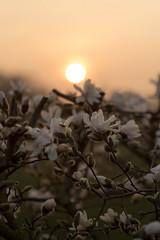 (matthiasolschewski) Tags: goldenestunde nikkoraf8514dif frühjahr