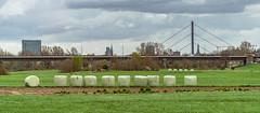 Pillars (Of Light & Lenses) Tags: düsseldorf skyline rhein rhineriver rheinkniebrücke bridge dreischeibenhaus architecture urban lörick nordrheinwestfalen modernearchitektur zeiss batis28135 sony emount