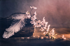 White spring (Ro Cafe) Tags: still life spring flowers whiteflowers blossoms feather oldbooks table wood naturallight textured nikkor105mmf28 sonya7iii