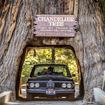 Chandelier Tree thumbnail