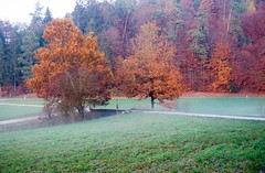 ... Herbstfarben ... (Geronimo52) Tags: colors couleur farben herbst baum tree arbre arbero countryside landschaft