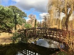 The Japanese Bridge in Regents Park (Peter Vangeen) Tags: iphone london outdoor regentspark trees tree bridge garden lake water japanesegarden winter japanesebridge