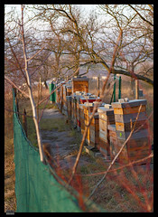 Roz 2019 (8) (***RM***) Tags: czechrepublic moravia zidlochovice country nature walk winter february nikon d850 nikkor 2470mm