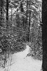 quabbinreservoir2019-88 (gtxjimmy) Tags: nikond7500 nikon d7500 winter snow quabbinreservoir swiftriver ware belchertown massachusetts watersupply newengland quabbin