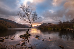 Llyn Padarn - Lone tree (de_frakke) Tags: tree lake llyn boom meer llanberris wales snowdonia uk nature winter
