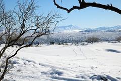 tonto-national-forest-1902230335 (nagerfran) Tags: cactus winter desert storm snow cold freeze arizona scottsdale tontonationalforest