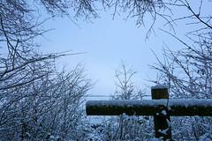 white landscape (Jos Mecklenfeld) Tags: winter snow schnee sneeuw forest wald bos nature natur natuur nulbos westerwolde sonya6000 sonyilce6000 selp1650 sonyepz1650mm niederlande nederland terapel groningen netherlands nl landscape landschaft landschap