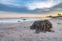 Seaweed (Siebbi) Tags: damp himmel meer ostsee photowalk seetang stein strand tang wasser wolken balticsea beach clouds lowangle ocean rock seascape seaweed sky water schleswigholstein deutschland de