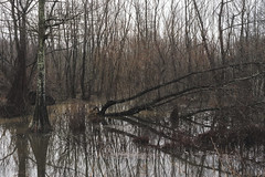 Flooding Wolf River (J McCallister) Tags: wolfriver trees water river