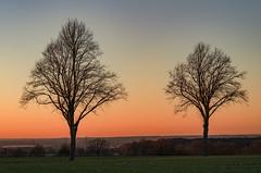 Friends forever (MSR-Photoarts) Tags: unna fröndenberg nrw ruhrgebiet ruhrpott aussicht view landscape baum bäume tree trees