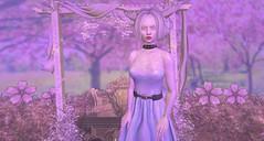 Lace & Sakura (Halfwraith) Tags: wlrp cureless genus delmay ancltd {anc} kosmetik opia livia tmcreation thetrunkshow oblivion fantavatarmoonstruck una escalated