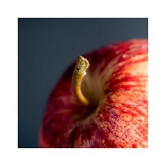 red apple (Francisco (PortoPortugal)) Tags: 0462019 20181218fpbo8887 square quadrada red vermelho maçã apple fruta fruit natureza nature macro franciscooliveira