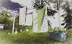 Calling (Loegan Magic) Tags: secondlife closeline ducks landscape grass sky lostdreams