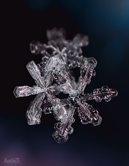 Three of a Kind (bcaldwellphoto.com) Tags: crystals ice macrophotography macro nature snow snowflakes