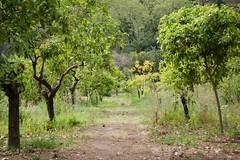 Jardín Botánico-Histórico, Málaga, Spain (AperturePaul) Tags: málaga spain europe nikon d600 garden plants botanical nature tree trees andalusia jardín botánicohistórico concepción