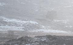 1.5 Trees (ShinyPhotoScotland) Tags: sunlight somethingnothing sunny scotland innocence composite darktable pinussylvestris digikam meaningemptiness equipment contrasts nature quiet flora toned places zen pine snow seasonal chilly vista rawconversion light winter trees pure landscape negativespace moment strathfionan imagemagickmedian airy space canon70200l art numinous nearfar rannoch photography calmstill manipulated minimalist highlands brightsunlight softlight melancholy perthshire emotion moody colour sonya7r3 weather hdr highlandperthshire peace lens sidelit idyll camera calm satoripunctum
