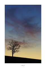 Away with the Wind (Max Angelsburger) Tags: igworldglobalilovenatureigdivineshotsearthofficialearthshotzmarvelshotstheworldshotzdiscoverglobelandscapeloverlandscapehunter tree silhouette horizon sky red orange rot blue blau sunset sonnenuntergang afterglow niefern öschelbronn niefernöschelbronn badenwuerttemberg badenwürttemberg germany deutschland february februar 2019