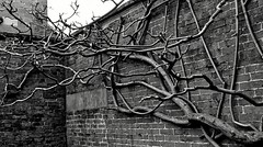 [NT] Kedleston Hall. Bare Walled Garden. Jan 2019 (Simon W. Photography) Tags: kedlestonhall nationaltrust englishcountryhouse derbyshire january2019 kedleston hall ambervalley quarndon exterior history historic historicengland gradei gradeilisted grade1listed gradeilistedbuilding gradeilistedcountryhouse stonework faces unitedkingdom uk england english greatbritain gb britain british eastmidlands simonhx100v sonyhx100v hx100v sony nationaltrustuk ntmidlands ntchallenge nationaltrustmembers nationaltrustmember curzonfamily blackandwhite blackwhite monochrome monotone greyscale grayscale bw bnw
