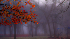 Foggy Park (Tim @ Photovisions) Tags: xt2 park fuji tree fujifilm fog nebraska beatrice gagecounty trees red leaves nebraskaland mirrorless