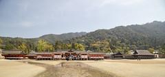 The Itsukushima shrine (fnks) Tags: asia japan tokyo hiroshima miyajima island sea trees ropeway shrines buddhism temples ferry sky deer beach tides tanterns water sunshine mountains
