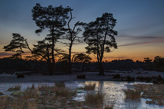 Twilight reflects on the ice (jan.vd.wolf) Tags: soesterduinen sunset zonsopgang soest utrecht nederland nl twilight ice refelection reflectie ijs schemer evening avond tree bomen