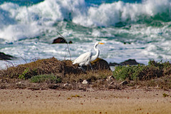 Kelly's Favorite Wildlife in Pacific Grove, CA, Christmas 2018 (Northwest Lovers) Tags: california pacificgrove