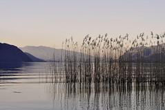 Un beau dimanche au bord de l'eau. 1 (Evim@ge) Tags: lac lake paysage landscape reflet reflection eau water quiet calme outside extérieur roseau roseaux roselière coucherdesoleil sunset soir evening savoie lebourget