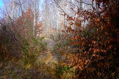 (vieubab) Tags: arbres atmosphère bois branchage branches calme chemin extérieur escapade forêt feuillage feuille hiver luminosité lumière nature nex5n paysage sentier sony