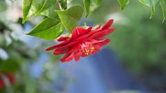 Kamelie (1elf12) Tags: kamelie bremen botanika germany deutschland flower blume