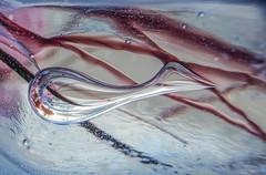 What is that? (M. Carpentier) Tags: macromondays whatisthat glass bird blue glassblowing verre verresoufflé