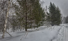 Snow storm / Метель (dmilokt) Tags: природа nature пейзаж landscape лес forest дерево tree снег snow dmilokt nikon d850