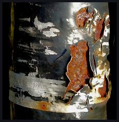 Rust abstract (tina negus) Tags: denton wharf post rust decay abstract