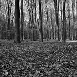 Forest in black and white thumbnail