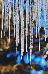 Frozen (starborn-alchemy) Tags: ice icicles nature macro bokeh winter canon texture outdoors arizona