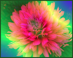 Fractals and flowers (allegra_) Tags: allegra fractals flowers effects natu