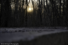 Lost For Good (brettmenglephotography) Tags: nikon nikonphotography naturephotography nikond5300 natural nature landscape woods sky stateparks sunset cuiverriver trees abandoned spring d5300