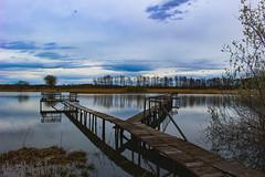 Tópart (Péter Vida) Tags: natural wesen springtime vorfrühling wood baum sky himmel scenery panorama pool see bridge brücke természet tavasz fa ég tájkép tó híd