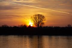 Thames Sunset, Fulham (London Less Travelled) Tags: uk unitedkingdom britain england london hammersmithfulham river thames sunset dusk evening water sky tree