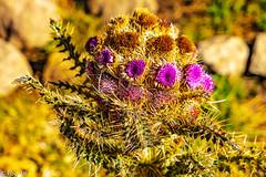 _FOU9628.jpg (Murray Foubister) Tags: africa gadventures spring treking tanazania flora travel 2018