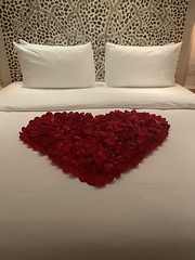 Pure love and relaxation. Best vacation ever. Superb staff. Over the top service. #lasventanasalparaiso (remiklitsch) Tags: luxury peacefulness serenity romance grace gratitude 2019 springbreak holiday vacation cabo petals mexico miksang bed white love heart red roses iphone remiklitsch lasventanasalparaiso