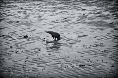 The Bone Collector (RadarO´Reilly) Tags: vogel bird knochen bone strand beach ebbe lowtide wyk föhr nordfriesland nf schleswigholstein sh germany nordsee northsea insel island sw be blanconegro monochrome noiretblanc zwartwit