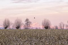 Pianura Piemontese 2 (claudio g) Tags: mondovì cuneo piemonte monviso redipietra pianura padana campo grano alba sunrise sun