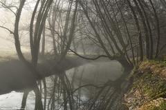 Mystic River (Hector Prada) Tags: forest bosque river rio light luz reflections reflejos shadows sombras nature naturaleza mist bruma fog niebla winter invierno paísvasco basquecountry