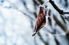 Wintertime (viktórianagynépetró1) Tags: wintertime winter nature naturelovers naturephoto frozen frost ice snowing