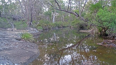 Dogtrap Creek_3 (Tony Markham) Tags: dogtrapcreek tributary bargoriver tahmoorgorge tahmoorcanyon cliffs sandstone cave overhang mermaidspool