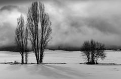 san martin de zar 1 (juan luis olaeta) Tags: paisajes landscape natura nieve elurra snow trebiño blakwhite blancoynegro zuribeltz photoshop fujifilmxt2 fujifilm