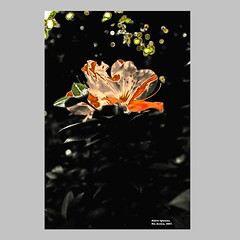 Aldrin_Iglesias_2019_16 (aldrin_iglesias) Tags: rioacimamg brasil brazil flor flower