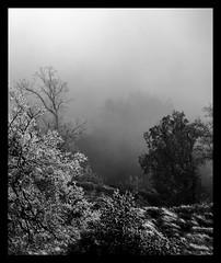 B/N (Cal Centelles) Tags: gebrada bosc frozen woods bn winter cold