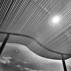 Under the canopy (LAKAN346) Tags: bnw bw bwphotography streetphotography architecture washingtondc outdoors monochrome curves contours
