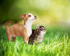 584210630 (sara.declercq) Tags: pets kitten puppy twoanimals copyspace grass dog canine togetherness friendship greencolor nature defocused outdoors domesticcat feline animal summer springtime field
